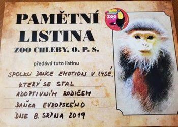 PŘÍMĚSTSKÝ TANEČNÍ TÁBOR 2019 – 4. DEN